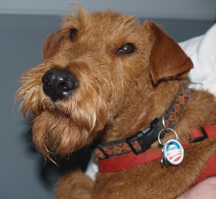Political dog, Sept 2008